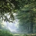 Не все леса одинаково полезны